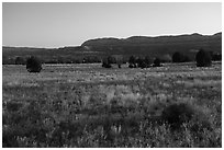 Grasses on plateau and Straight Cliffs. Grand Staircase Escalante National Monument, Utah, USA ( black and white)