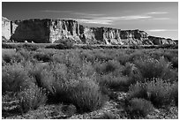 Rabbitbrush and cliffs bordering Wahweap Wash. Grand Staircase Escalante National Monument, Utah, USA ( black and white)