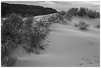 Sand dunes and bushes, Coral Pink Sand Dunes State Park. Utah, USA (black and white)