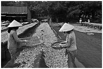 Women working drying fish. Phu Quoc Island, Vietnam (black and white)