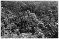 Tropical forest on hillside. Ta Cu Mountain, Vietnam (black and white)