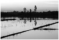 Flooded rice fields at sunset. Mekong Delta, Vietnam (black and white)