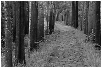 Paved path in forest. My Son, Vietnam (black and white)