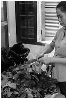 Woman detaching leaves for feeding silkworms. Hoi An, Vietnam ( black and white)