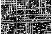 Grid with ellow and white silkworm cocoons. Hoi An, Vietnam ( black and white)
