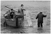 Men operating fish traps. Vietnam ( black and white)