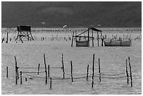 Pilings and fishing nets in lagoon. Vietnam (black and white)