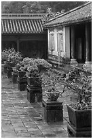 Bonsai trees in palace courtyard, citadel. Hue, Vietnam (black and white)