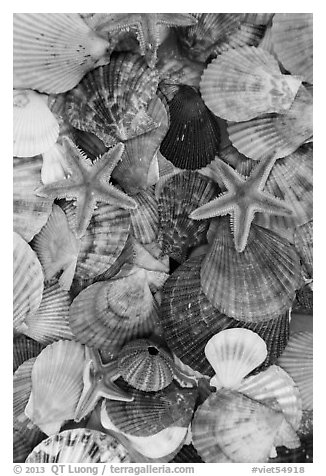 Close-up of colorful sea shells. Mui Ne, Vietnam (black and white)