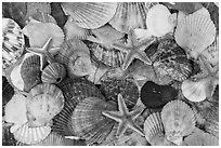 Multicolored sea shells. Mui Ne, Vietnam (black and white)