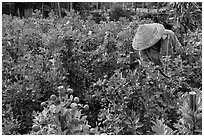 Man working in fruit orchard. Sa Dec, Vietnam (black and white)