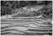 Rice terraces. Northeast Vietnam (black and white)