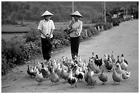 Thai women herding ducks, Tuan Giao. Northwest Vietnam (black and white)