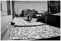 Women carrying a panel of dried fish. Vung Tau, Vietnam (black and white)