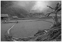 Rice cultures at a mountain village. Vietnam (black and white)
