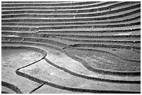 Terraced rice fields. Sapa, Vietnam (black and white)