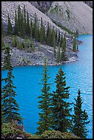Conifers and blue waters of Moraine Lake. Banff National Park, Canadian Rockies, Alberta, Canada