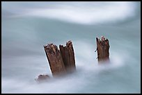 Stumps in the Whirlpool River. Jasper National Park, Canadian Rockies, Alberta, Canada (color)