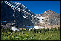 Cavell Meadows, Mt Edith Cavell, and Angel Glacier, morning. Jasper National Park, Canadian Rockies, Alberta, Canada (color)