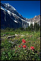 Alpine meadow and Paintbrush below Mt Edith Cavell. Jasper National Park, Canadian Rockies, Alberta, Canada (color)