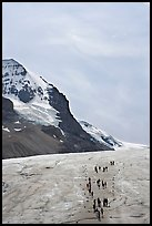 Athabasca Glacier with people in delimited area. Jasper National Park, Canadian Rockies, Alberta, Canada