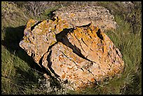 Rock with lichen lying in grass, Dinosaur Provincial Park. Alberta, Canada (color)