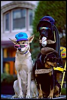 Two performing dogs. Victoria, British Columbia, Canada