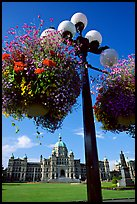 Baskets of flowers suspended from lamp post with parliament in the background. Victoria, British Columbia, Canada