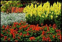 Patches of flowers. Butchart Gardens, Victoria, British Columbia, Canada