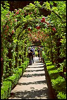 Arbour and path in Rose Garden. Butchart Gardens, Victoria, British Columbia, Canada
