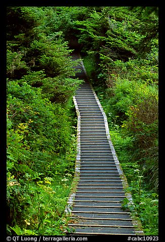 Boardwalk leading to South Beach. Pacific Rim National Park, Vancouver Island, British Columbia, Canada
