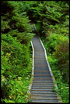 Boardwalk leading to South Beach. Pacific Rim National Park, Vancouver Island, British Columbia, Canada ( color)
