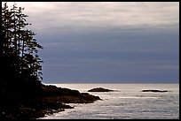 Trees and silvery light on Ocean, late afternoon. Pacific Rim National Park, Vancouver Island, British Columbia, Canada ( color)