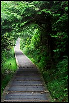 Boardwalk, South Beach trail. Pacific Rim National Park, Vancouver Island, British Columbia, Canada