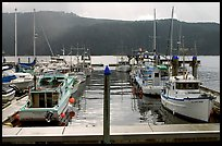 Fishing boats in harbour in Alberni Inlet, Port Alberni. Vancouver Island, British Columbia, Canada