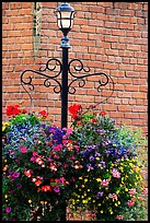 Flowers, street lamp, brick wall. Victoria, British Columbia, Canada ( color)