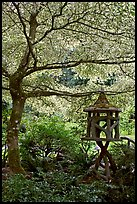 Lantern and Variegated Dogwood, Japanese Garden. Butchart Gardens, Victoria, British Columbia, Canada (color)
