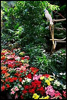 White Parrot and flowers, Bloedel conservatory, Queen Elizabeth Park. Vancouver, British Columbia, Canada (color)