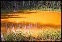One of the ochre-colored Paint Pots, a warm mineral spring. Kootenay National Park, Canadian Rockies, British Columbia, Canada