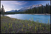 Mitchell range, Kootenay River, and flowers, sunset. Kootenay National Park, Canadian Rockies, British Columbia, Canada