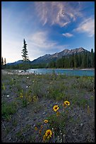 Sunflowers, Kootenay River, and Mitchell Range, sunset. Kootenay National Park, Canadian Rockies, British Columbia, Canada (color)