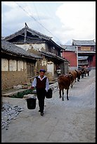 Through village streets with the cows. Baisha, Yunnan, China ( color)