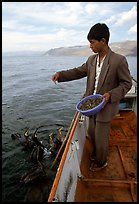 Cormorant fisherman feeds small fish to his birds as a prize for catching large fish. Dali, Yunnan, China ( color)