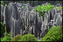Trees and grey limestone pillars of the Stone Forest, split by rainwater. Shilin, Yunnan, China