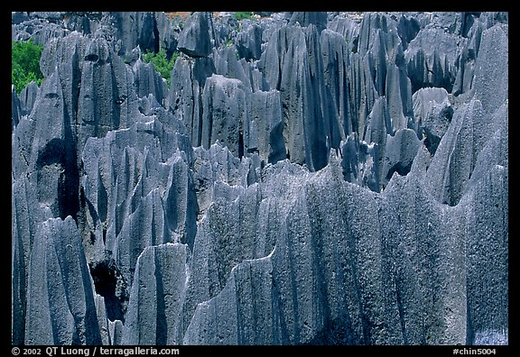 Maze of grey limestone pinnacles and peaks of the Stone Forst. Shilin, Yunnan, China (color)