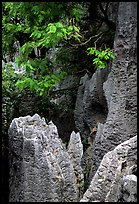 Details of grey limestone pinnacles of the Stone Forst. Shilin, Yunnan, China