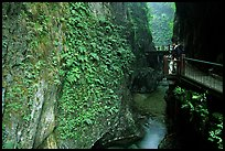 Narrow Gorge between Qingyin and Hongchunping. Emei Shan, Sichuan, China (color)