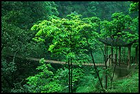Suspension bridge between Qingyin and Hongchunping. Emei Shan, Sichuan, China (color)