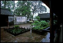 Courtyard of Hongchunping temple in the rain. Emei Shan, Sichuan, China (color)