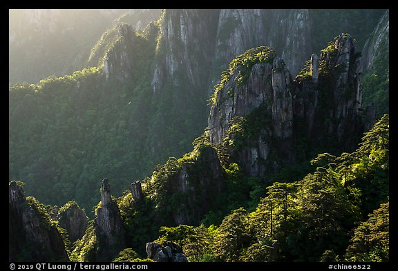 Granite spires with lush vegetation. Huangshan Mountain, China (color)